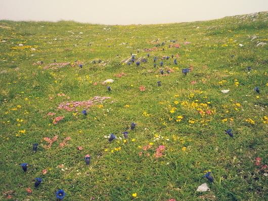 «Chaque jour cent fleurs» —  pour Philippe Aigrain et sa famille, ce bouquet de «haïkus»