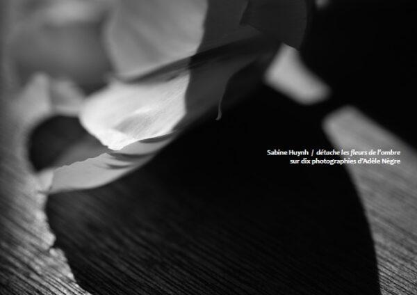 détache les fleurs de l'ombre
